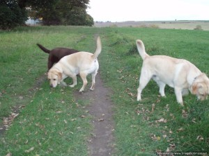 Dog Walking, Home from Home Pet and Dog Boarding, Pet and Cat Visiting, Bark and Ride Pet Taxi